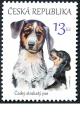 Štěňata - česká národní plemena psů: Český strakatý pes - č. 875 - za nominál